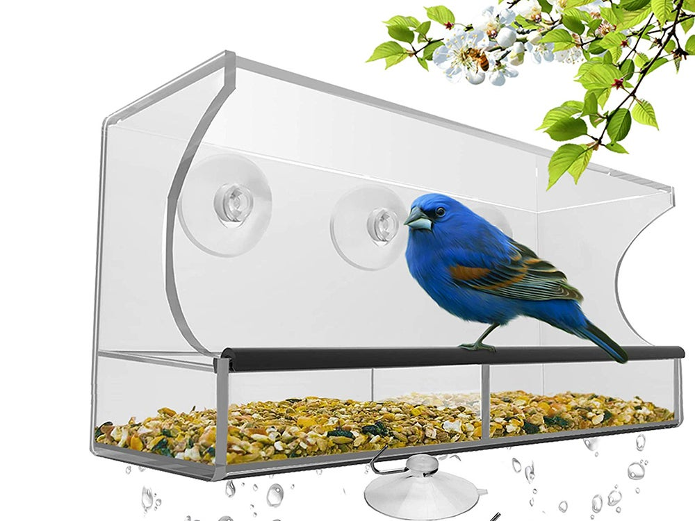 clear window bird feeder with suction cups and a blue bird