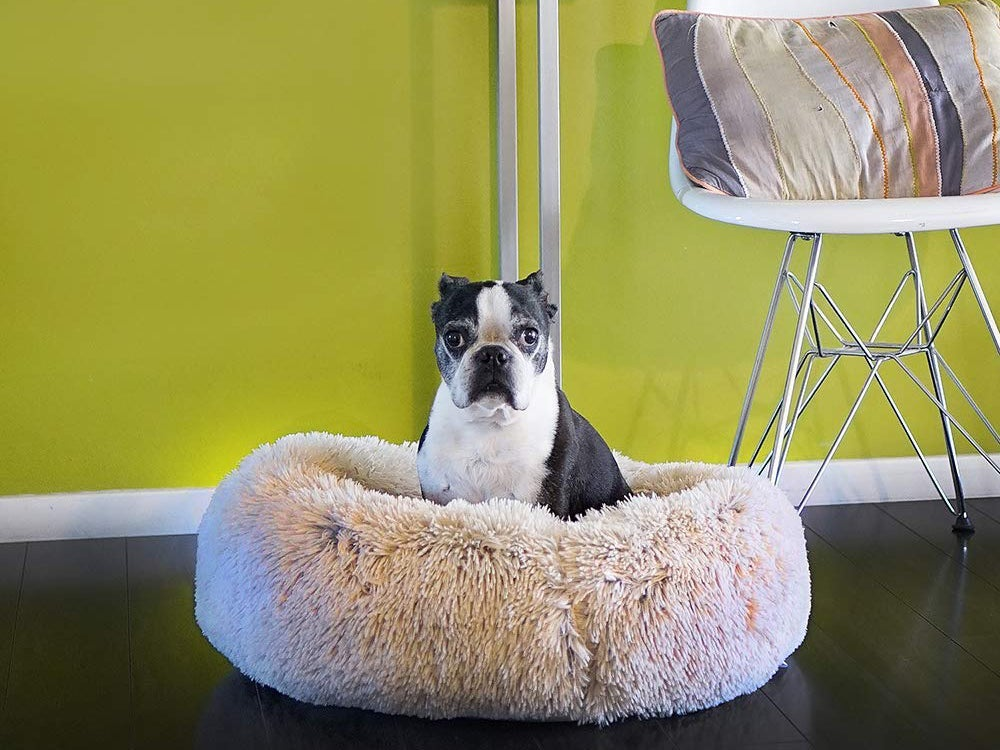 black and white dog on fluffy bed with lime green background