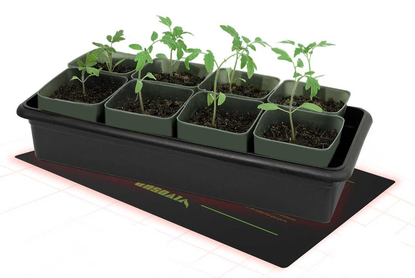 Spicy peppers growing in a tray.