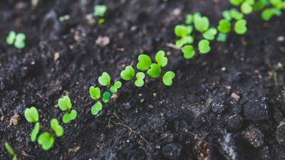 How to Keep Your Garden Weed Free