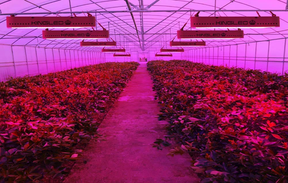 Indoor farm with pink grow light