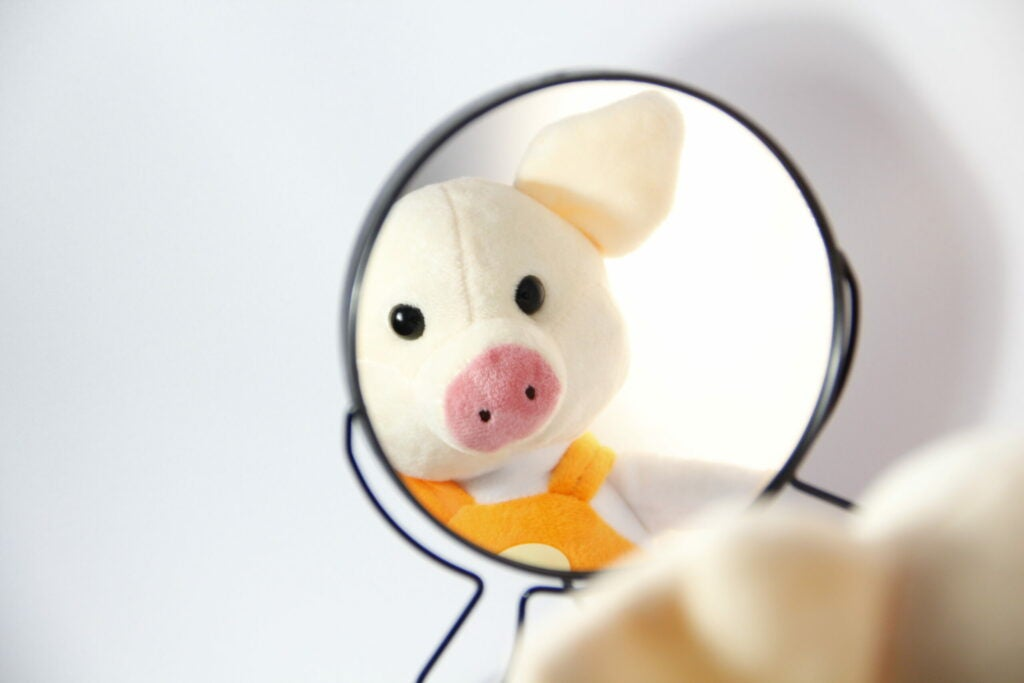 pig looks at himself in the mirror
