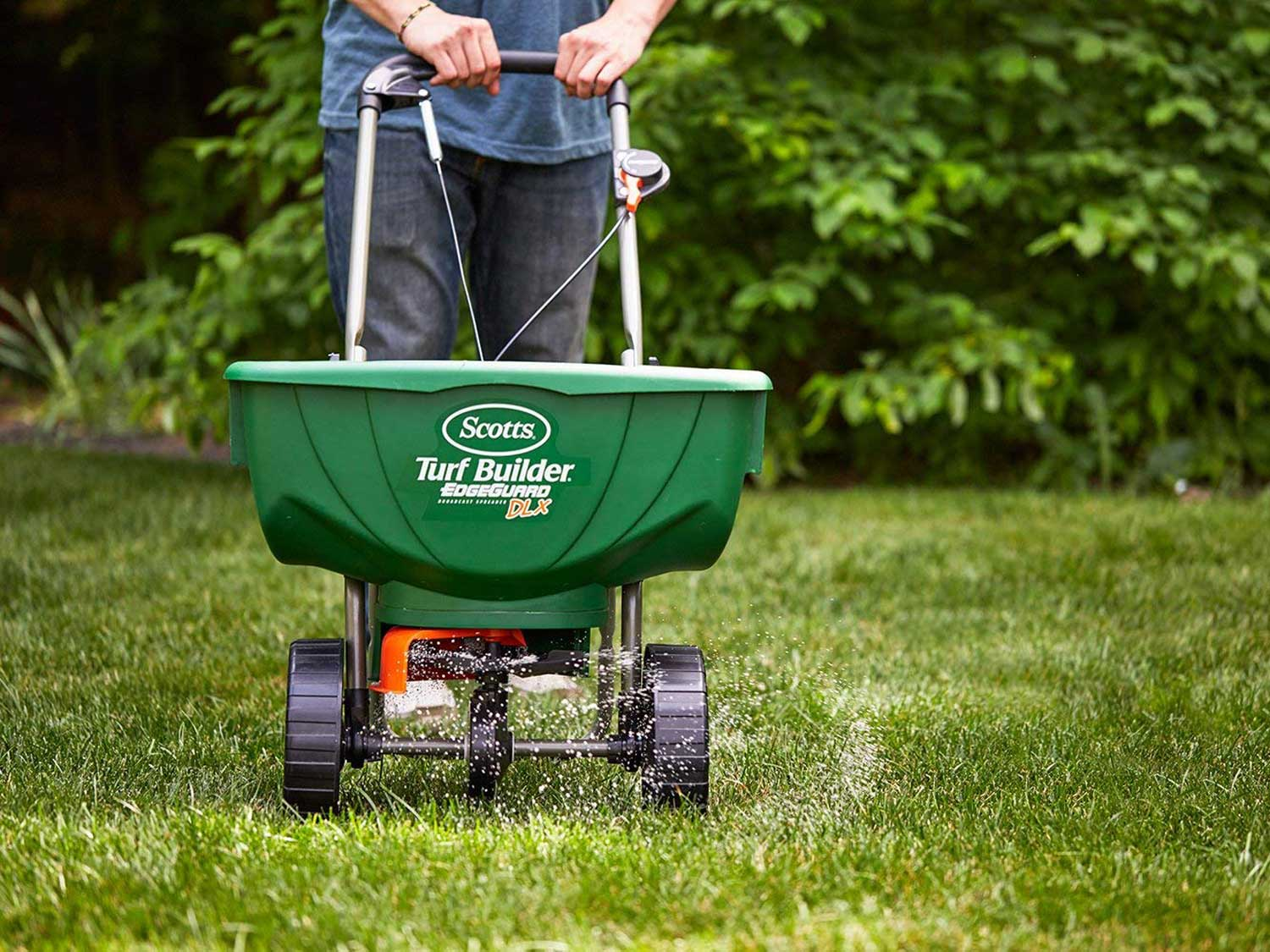 Spreading grass fertilizer or seed on lawn.