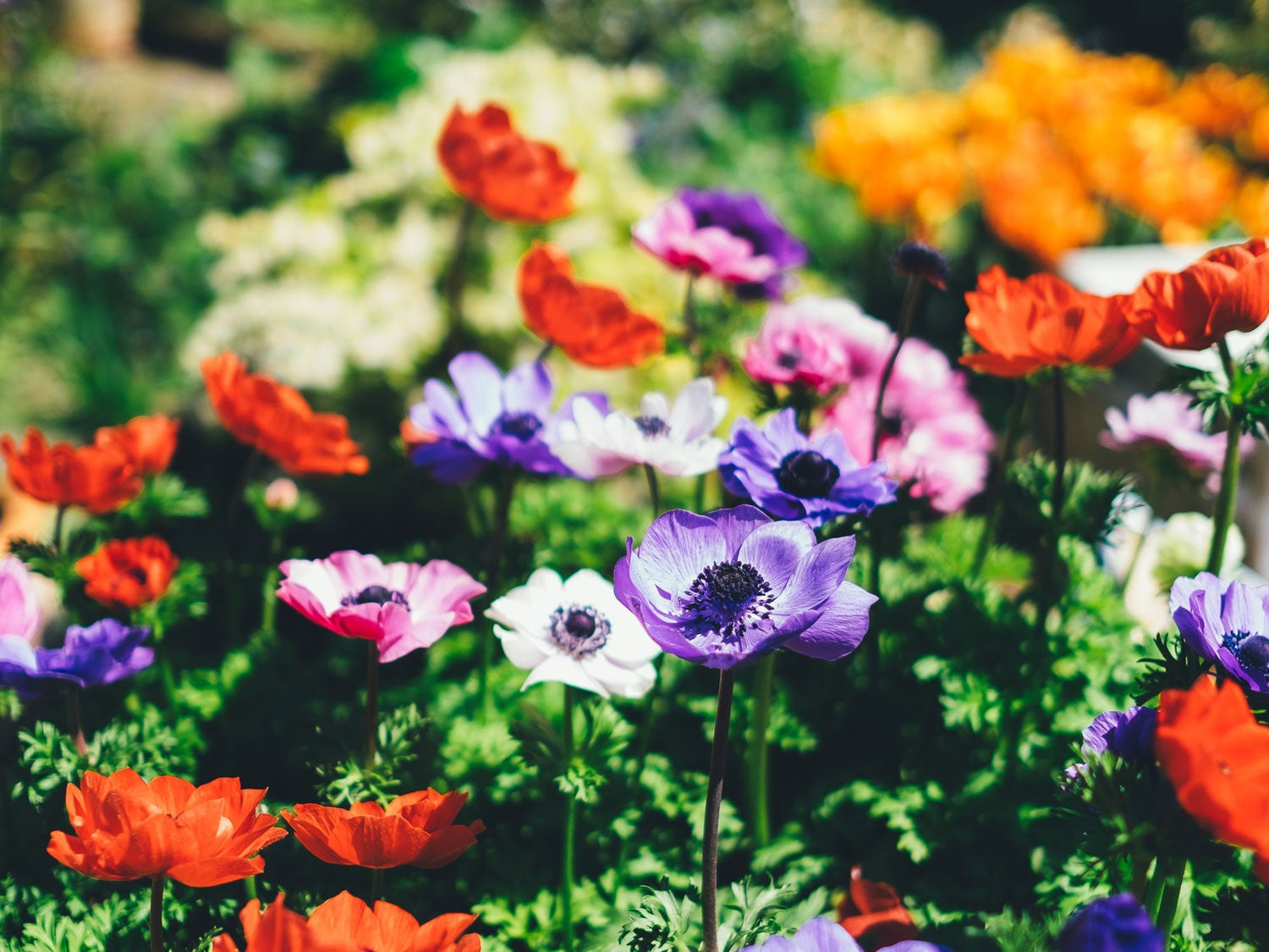 Garden of flowers maintained using herbicide sprayer.