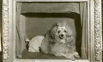 """A Photographic History of the Day the """"Greatest Dog in the World"""" Disappeared"""