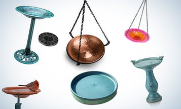 Best Bird Baths to Attract Feathered Friends to Your Yard