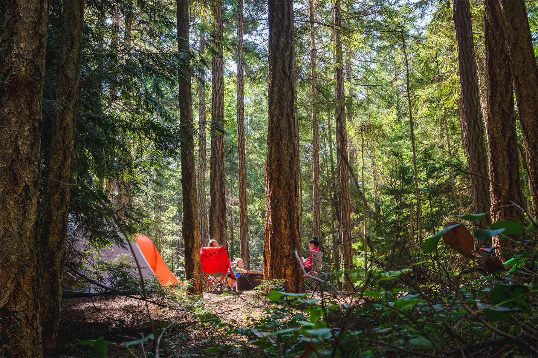 Family camping in the woods