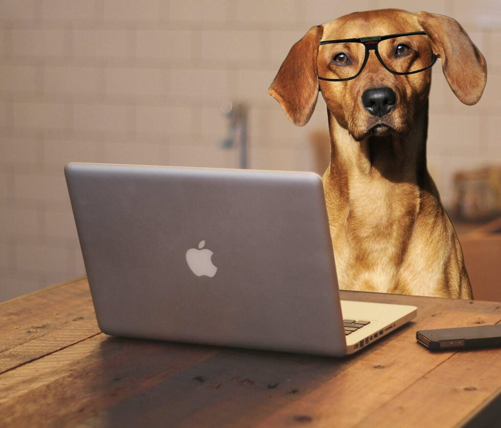 Brown dog wearing glasses working at a laptop