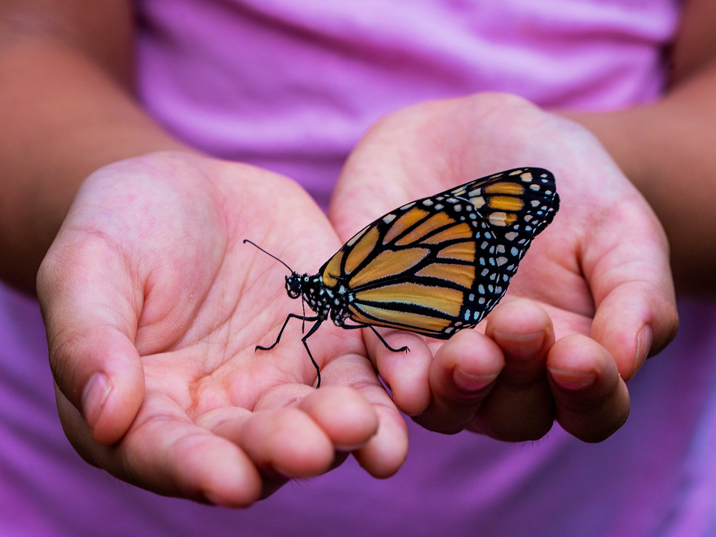 Girl holding monarch butterfly.