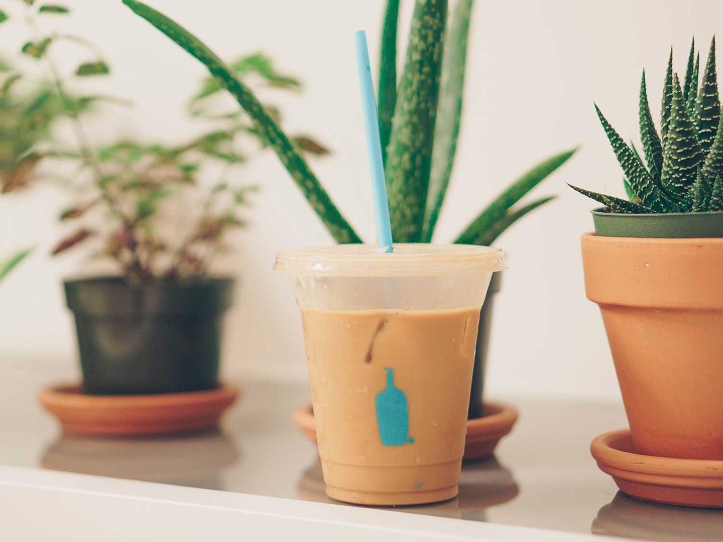 Iced coffee on counter with plants.