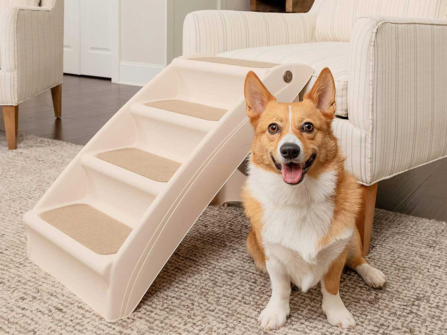 Dog sitting with pet stairs leading up to chair.