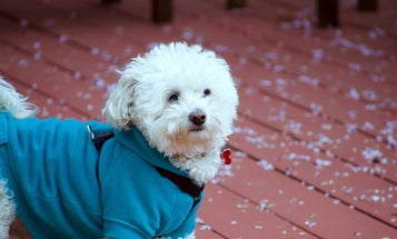 The Best Dog Jackets for Your Furry Friend