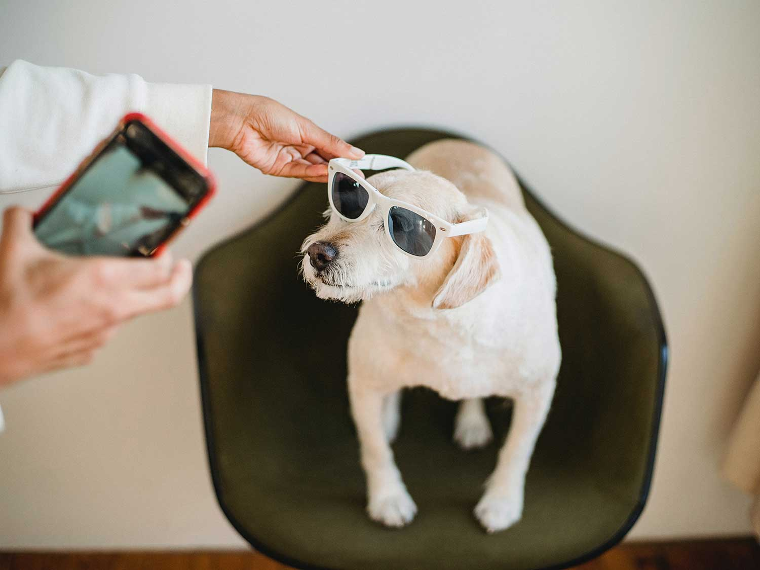 Dog wearing sunglasses.