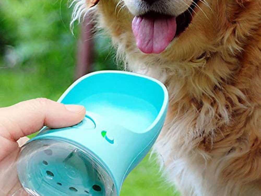 Dog drinking from pet water bottle.