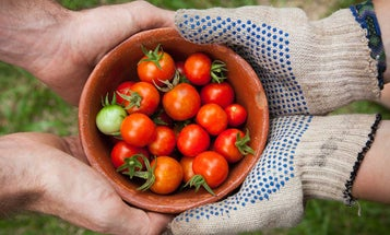 Three Things To Consider When Buying Gardening Gloves