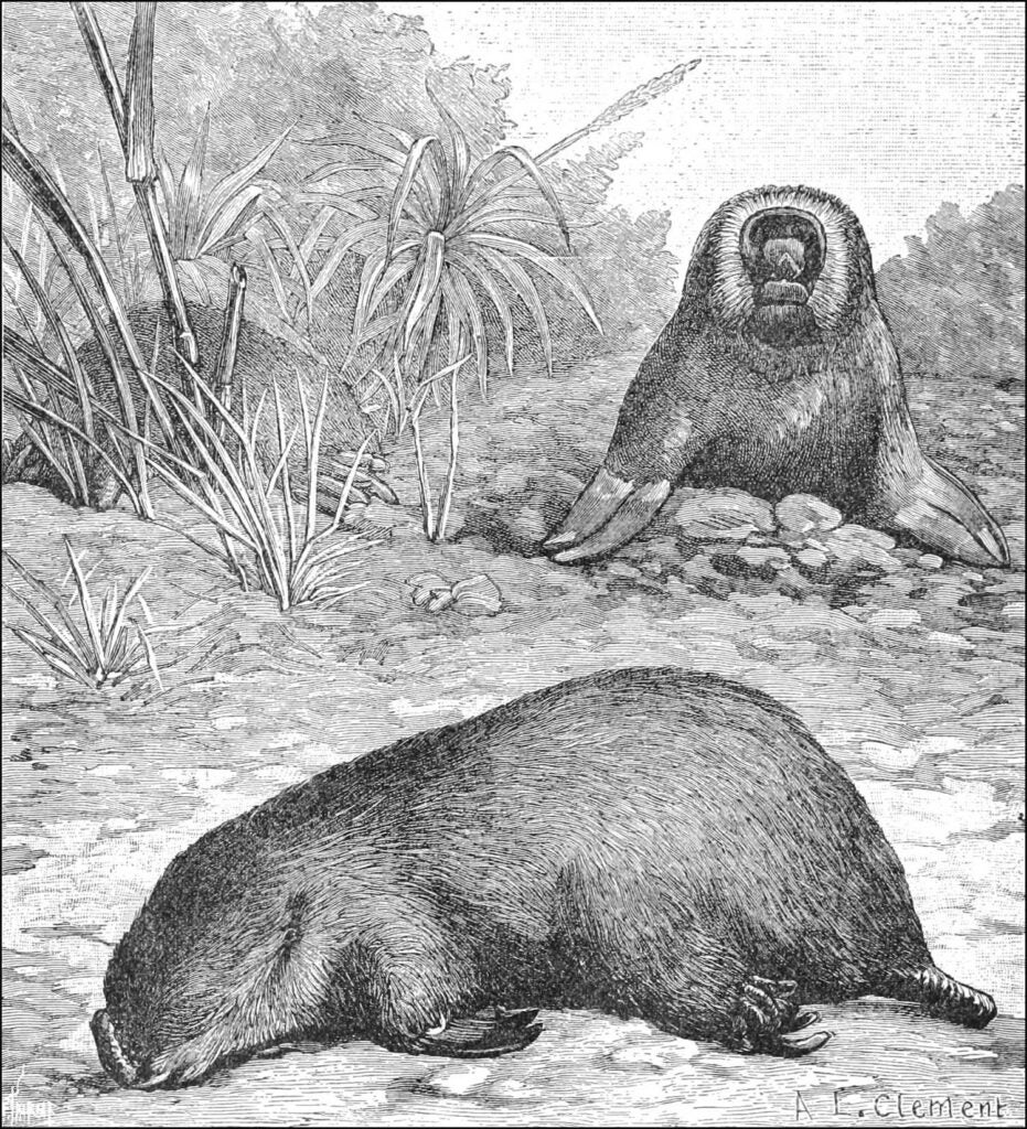 Black and white illustration of two marsupials