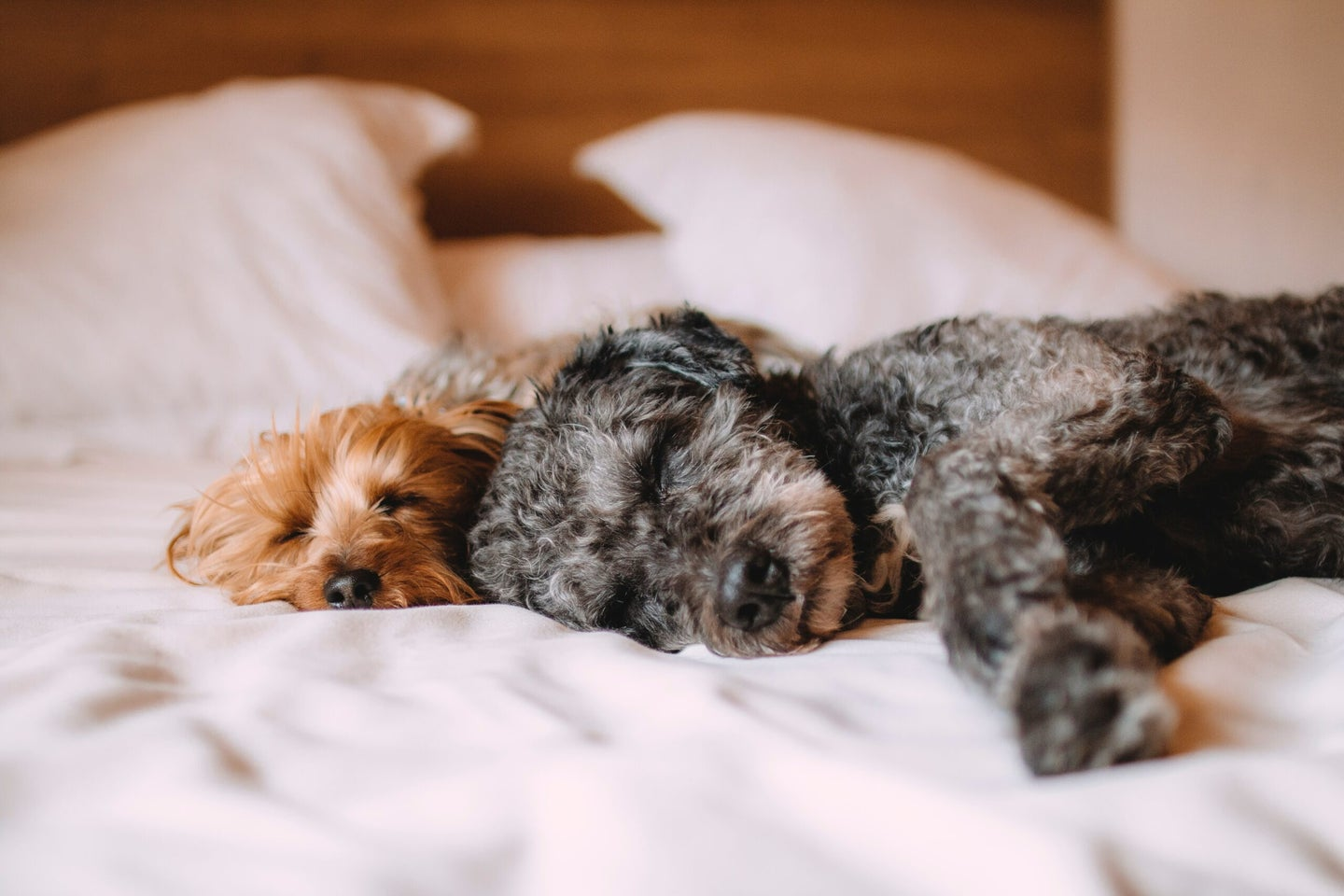 two dogs sleeping on a bed