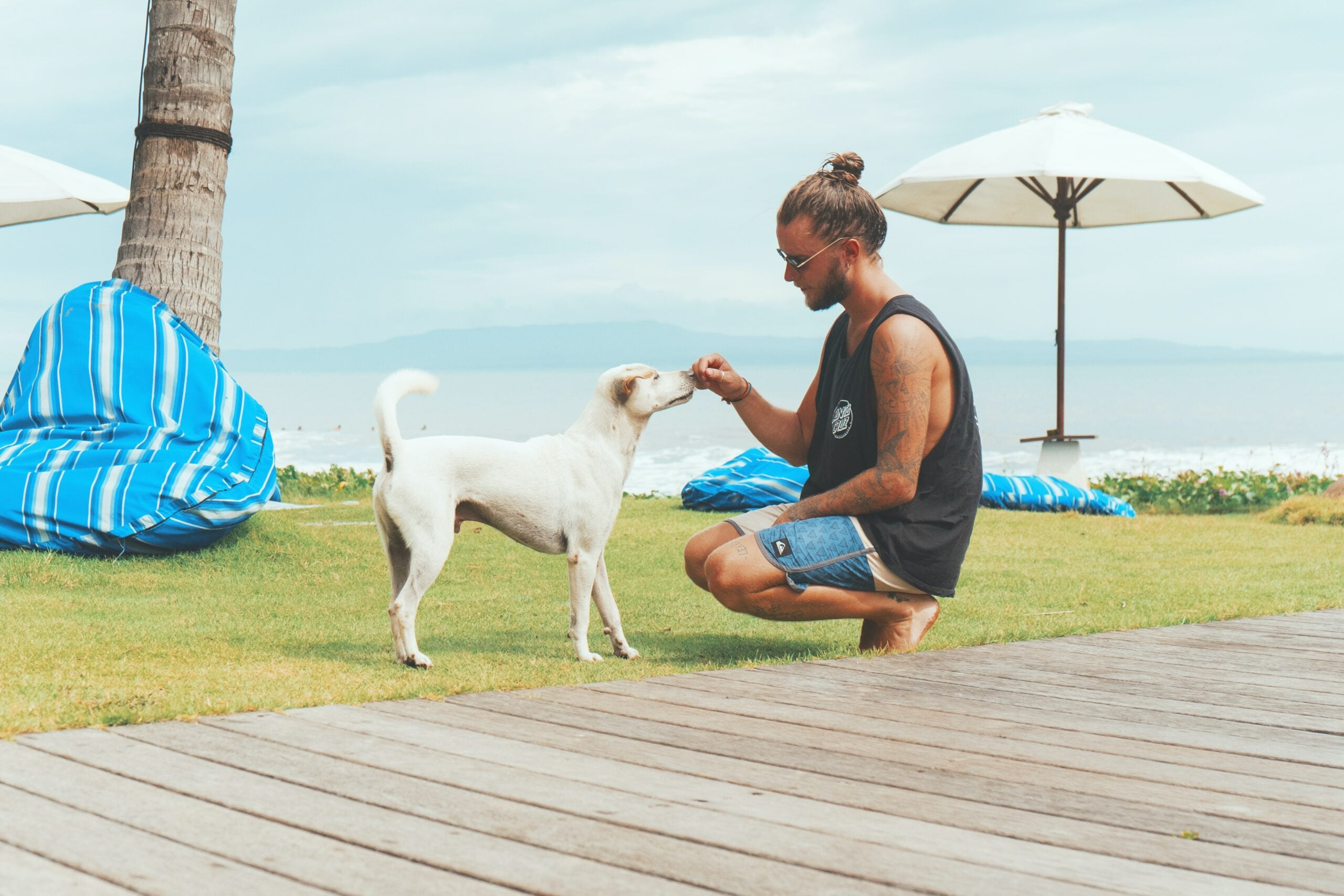man on a boardwalk giving his dog a treat