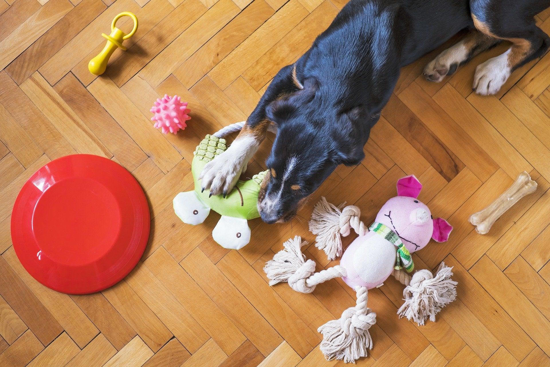 black and brown dog surrounded by toys on the floor