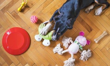 Dog Puzzle Toys to Stimulate Your Pooch's Mind