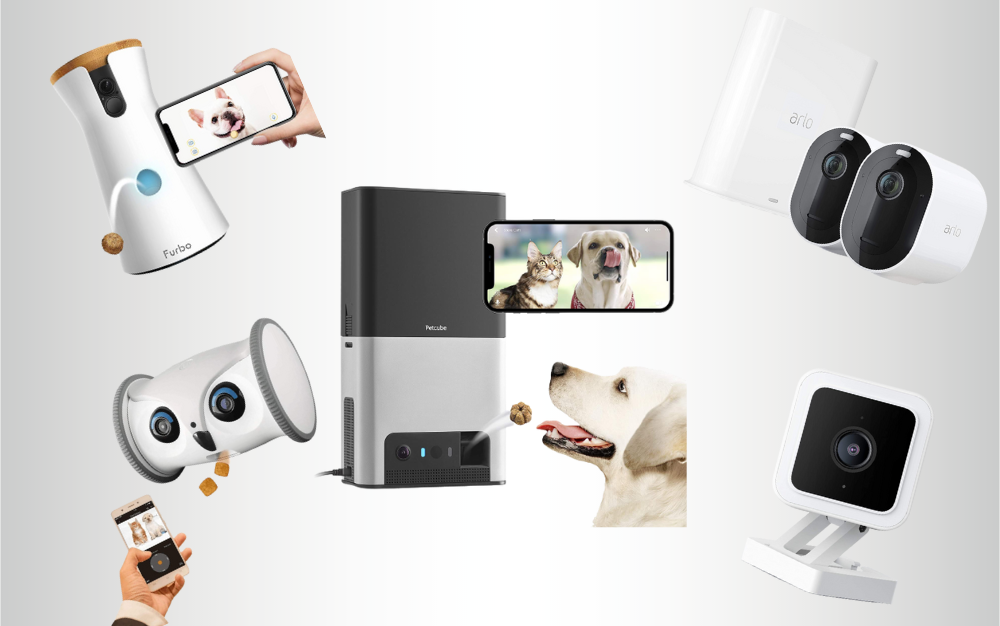 The Best Pet Cameras of 2021