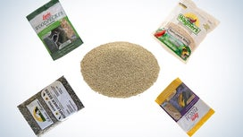 These are our picks for the best bird seed on Amazon.